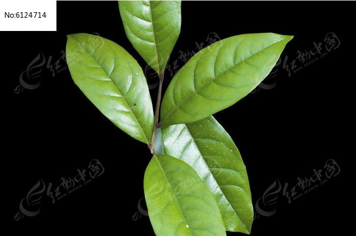 原创摄影图 动物植物 树木枝叶 绿色树叶