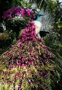 鲜花编织的孔雀