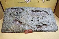 阿法南猿人脚印