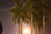 黑夜中的树木摄影