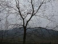 枯树的枝干