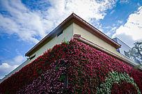 欧式建筑外墙的一片红花