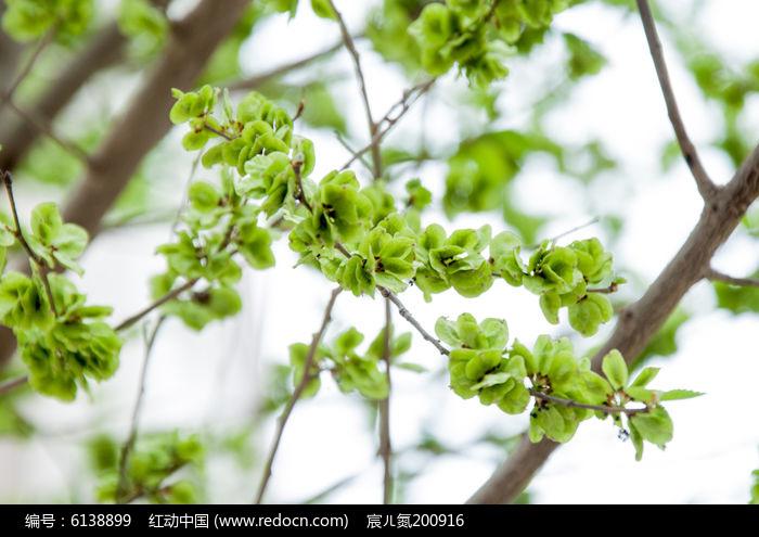 树叶子图片,高清大图_花卉花草素材