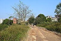 乡村道路摄影