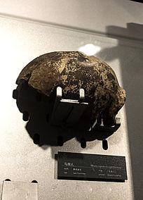 马坝人头骨化石