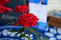 玫瑰花一朵