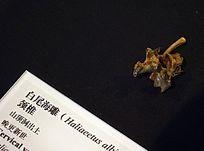 山顶洞出土的白尾海雕颈椎