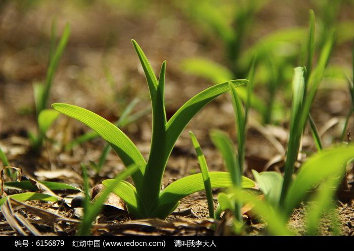 原创摄影图 动物植物 花卉花草 春天的草