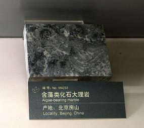 含藻类化石大理岩标本