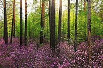 山花盛开大森林