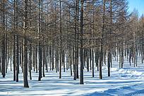 坝上森林雪景
