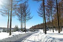坝上树林雪景
