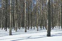 草原森林雪景