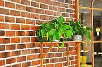 绿色盆栽小品