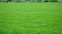 一片绿色草地