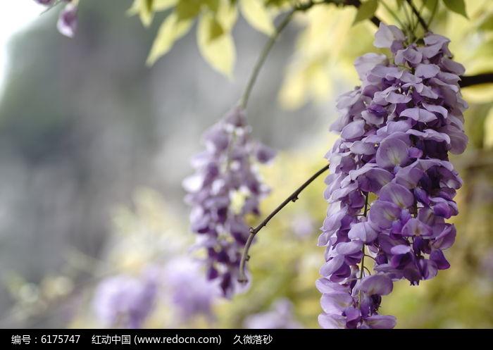 紫藤萝图片简笔花海手绘