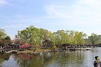垂柳湖水自然风景大图