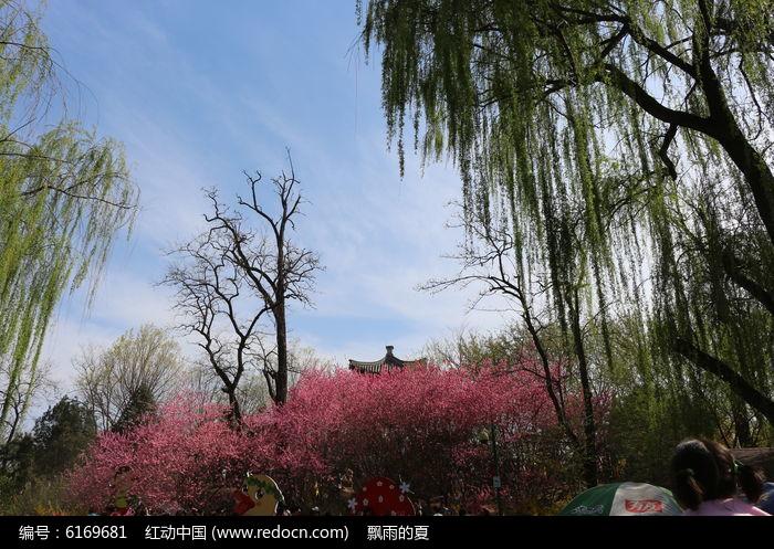 垂柳桃花大图背景图片,高清大图_森林树林素材