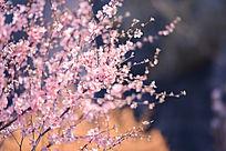 小清新春季花卉照片