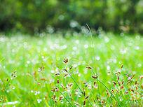 雨后的草儿