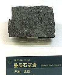 叠层石灰岩标本