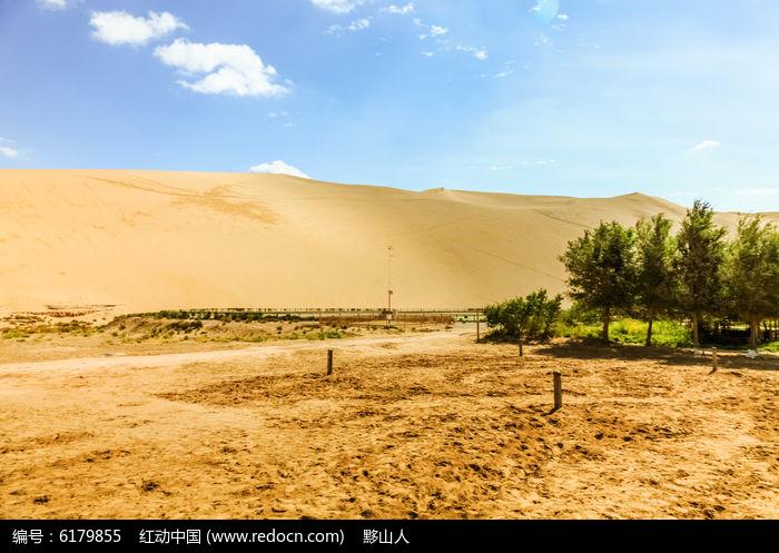 生长在沙漠中的树木图片