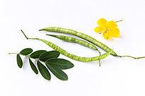 药用植物决明
