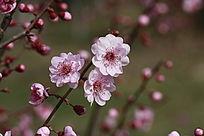 春天开放的漂亮的三朵花
