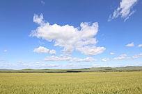 呼伦贝尔田园风景