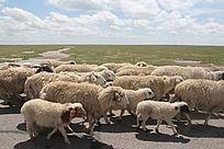 呼伦贝尔羊群