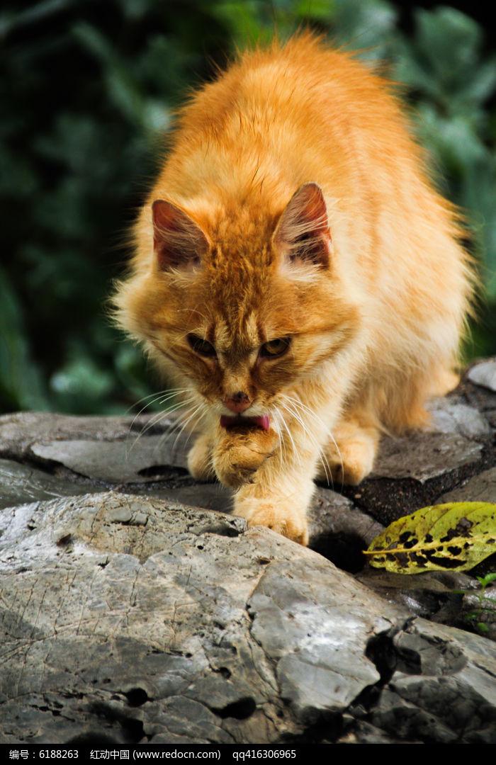 猫猫编织小金鱼开衫