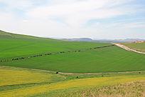 内蒙古草原风景