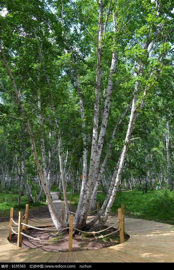内蒙古树木风景图片