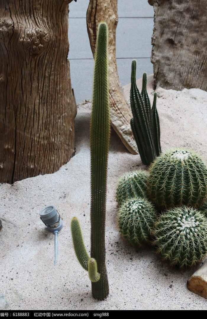 原创摄影图 动物植物 花卉花草 热带沙漠植物仙人球  请您分享: 红动