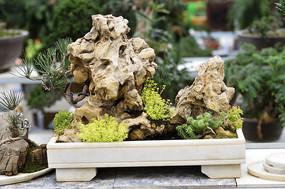 太湖石多肉植物种植