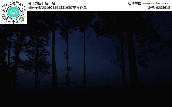 原创摄影图 动物植物 树木枝叶 黑树林  请您分享: 红动网提供树木
