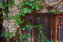 爬满藤蔓的窗