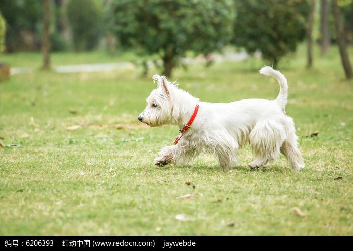草地上奔跑的小狗
