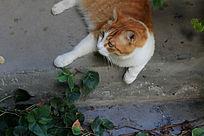 懒散的加菲猫
