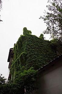爬满爬山虎的房子
