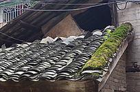 瓦房的屋顶