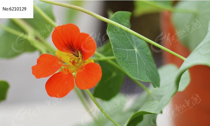 原创摄影图 动物植物 花卉花草 妖艳的红花  请您分享: 素材描述:红动