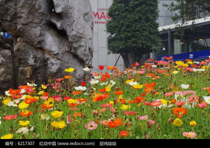原创摄影图 动物植物 花卉花草 路边的鲜花