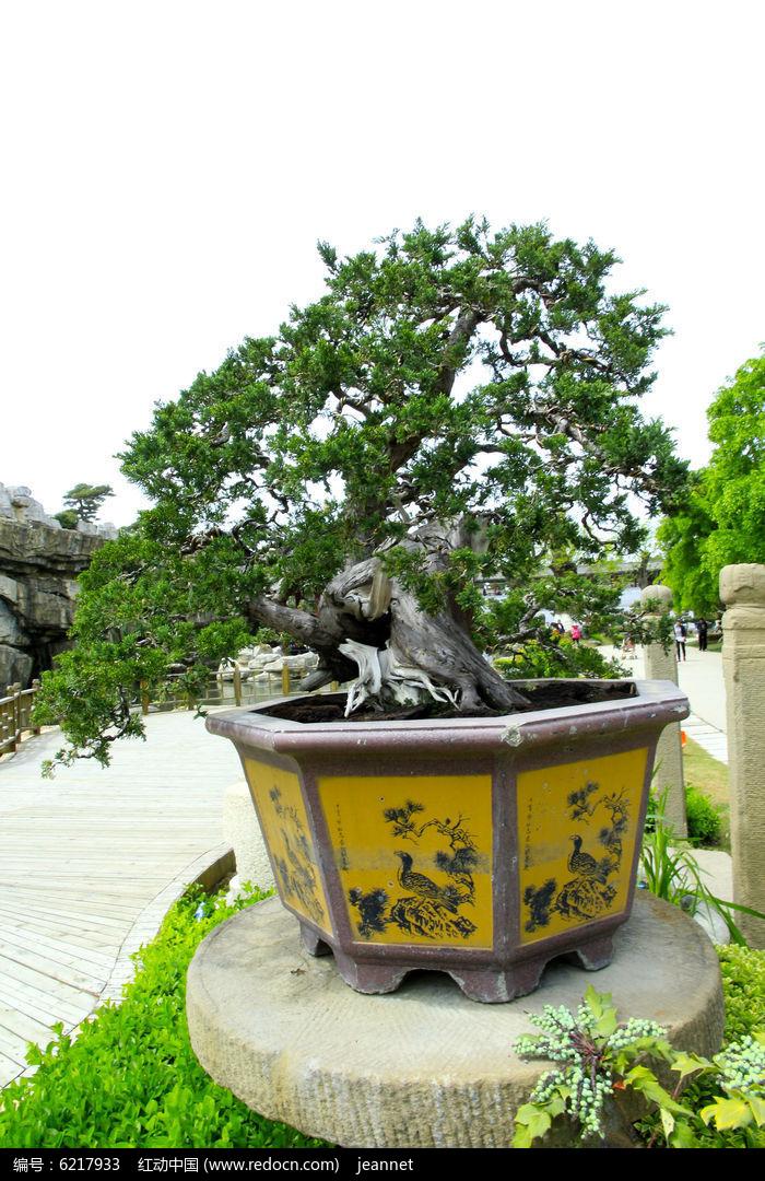 原创摄影图 动物植物 树木枝叶 盆景古树  请您分享: 红动网提供树木