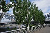 岸边一排树