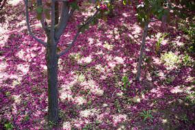 洒落地面的花瓣