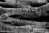 树身纹理背景