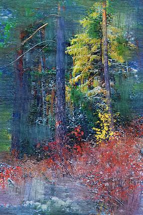 原创摄影图 自然风景 森林树林 秋雪松林小路