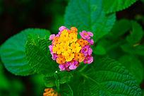 美丽的野花