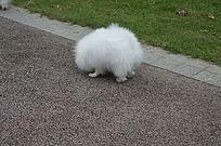 白色小狗侧影